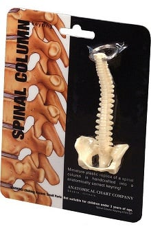 Anatomical Chart Company Spine Key Ring
