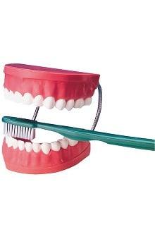 dental : Anatomical Chart Company Big Tooth Brushing Anatomical Model