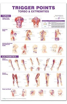 Anatomical Chart Company Trigger Point Chart Set