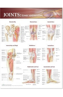 Anatomical Chart Company Joints Of The Lower Extremities Anatomical Chart