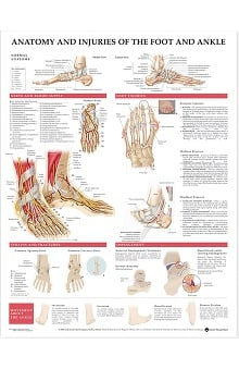 Anatomical Chart Company Anatomy And Injuries Of The Foot And Ankle Anatomical Chart