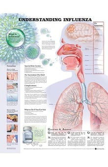 Anatomical Chart Company Influenza Anatomical Chart