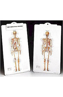 Anatomical Chart Company The Skeleton Anatomical Clipboard
