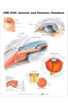 Anatomical Chart Company The Eye: Chambers Anatomical Chart