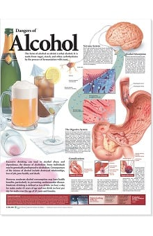 Anatomical Chart Company Dangers Of Alcohol Anatomical Chart