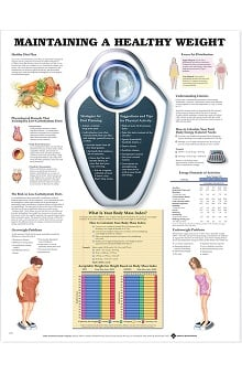 Anatomical Chart Company Maintain A Healthy Weight Anatomical Chart