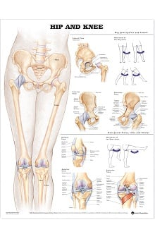 Anatomical Chart Company Hip And Knee Anatomical Chart