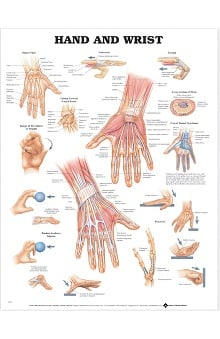 Anatomical Chart Company Hand And Wrist Anatomical Chart