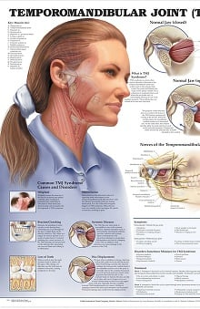 Anatomical Chart Company The Temporomandibular Joint Anatomical Chart