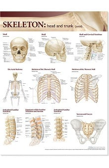 Anatomical Chart Company Atlas Of Anatomy Skeletal Head And Trunk Anatomical Chart