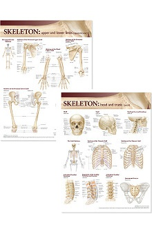 Anatomical Chart Company Atlas Of Anatomy Skeletal Anatomical Chart Set
