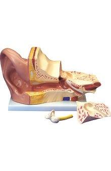 stethoscope ear buds: Anatomical Chart Company Budget Giant Ear Model