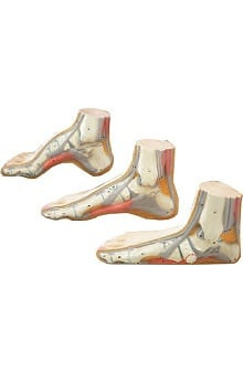 Anatomical Chart Company Set Of Three Feet Flat, Arched, Normal