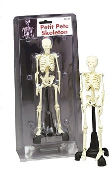 Anatomical Chart Company Petit Pete Skeleton Clamshell