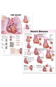 Anatomical Chart Company The Heart And Heart Disease Set Of 2 Anatomical Charts