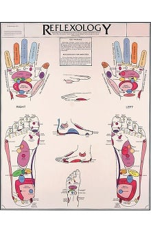 Anatomical Chart Company Reflexology Anatomical Chart