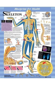 Anatomical Chart Company Blueprint for Health Your Skeleton Chart