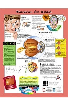 Anatomical Chart Company Your Eyes
