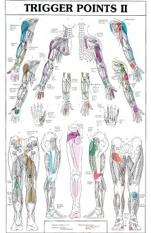 Anatomical Chart Company Trigger Points I & II Chart Set Anatomical Chart