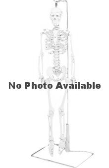 Anatomical Chart Company Flexible Mr. Thrifty Table-Size Skeleton with Spinal Nerves Anatomical Model