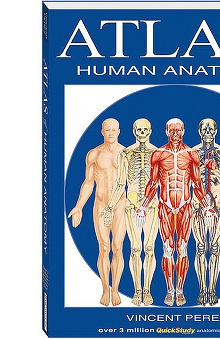 Bar Charts Atlas Of Human Anatomy Guide