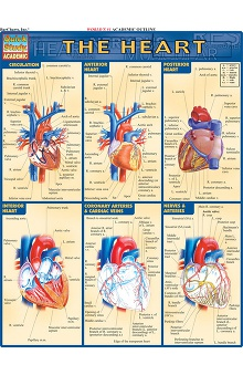 Bar Charts Heart Guide