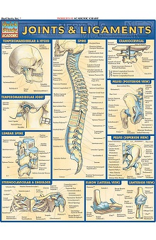 Bar Charts Joints and Ligaments Guide