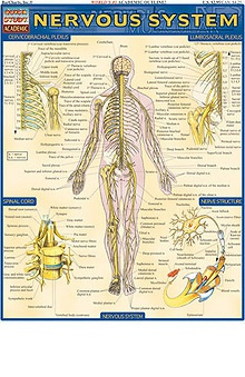 Bar Charts Nervous System Guide