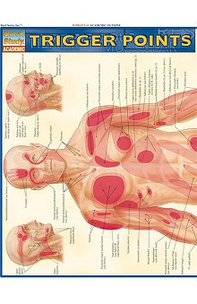 Bar Charts Trigger Points Guide