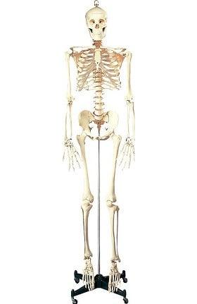 Anatomical Chart Company Iron Cross Stand