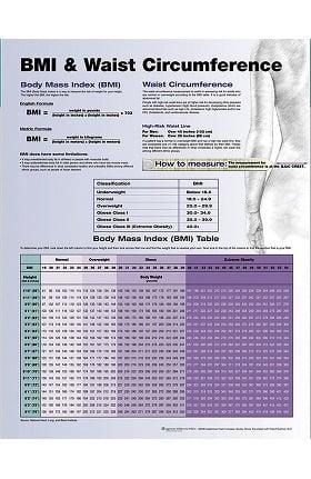 Anatomical Chart Company BMI & Waist Circumference Anatomical Chart