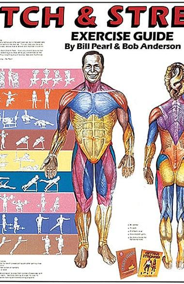 Anatomical Chart Company Stretch Strengthen Anatomical Chart