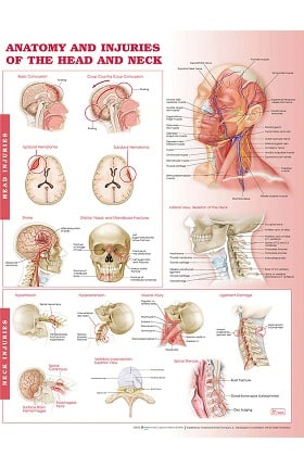 Anatomical Chart Company Anatomy and Injuries Of The Head and Neck Anatomical Chart