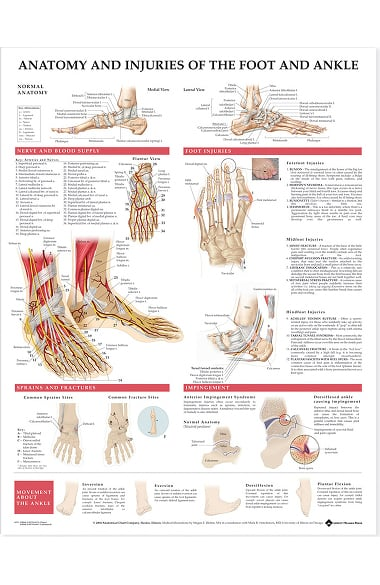 Anatomical Chart Company Anatomy And Injuries Of The Foot And Ankle