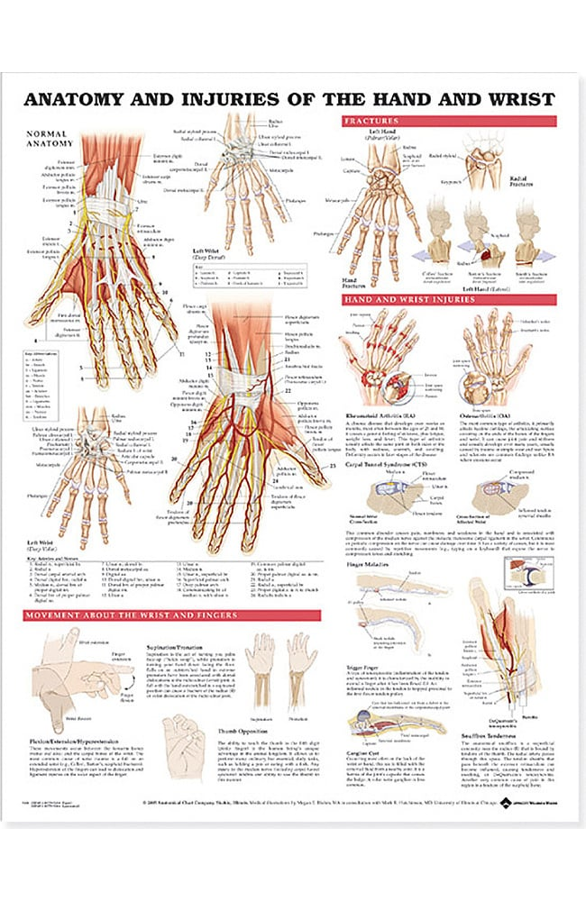 Anatomical Chart Company Anatomy and Injuries Of The Hand and Wrist ...