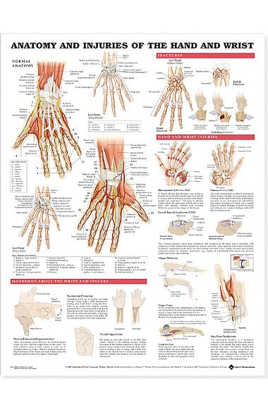 Anatomy And Injuries Of The Hand Wrist Anatomical Unmounted Chart