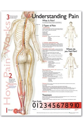 Anatomical Chart Company Pain Anatomical Chart