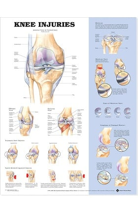 Anatomical Chart Company Knee Injuries Anatomical Chart