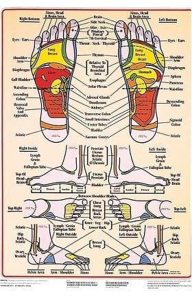 Anatomical Chart Company Foot Reflex Chart by The International Institute of Reflexology