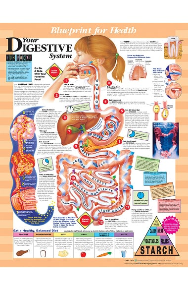 Anatomical chart company blueprint for health your digestive system anatomical chart company blueprint for health your digestive system chart malvernweather Choice Image