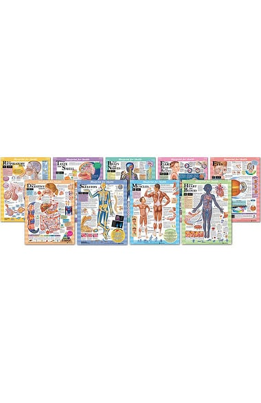 Anatomical chart company blueprint for health series charts set of 9 malvernweather Gallery