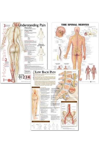 Anatomical Chart Company Neurology Three-Chart Set: The Spinal ...